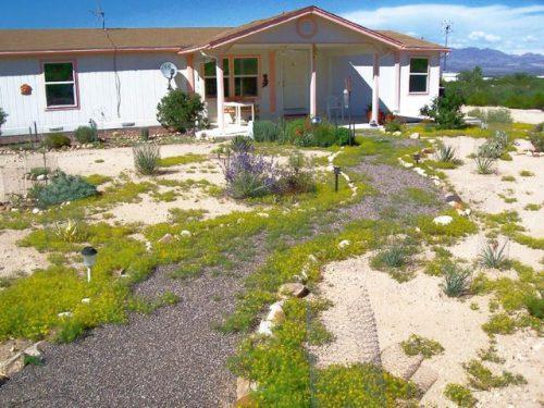Desert gardening 6