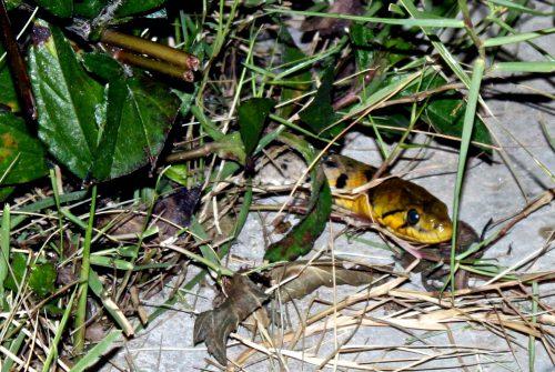 Mord på en oskyldig orm 1