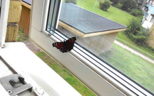 Fjärilen på fönsterbrädet